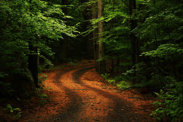Road in the dense forest.